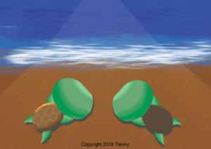 Turtle Habitat Step 1